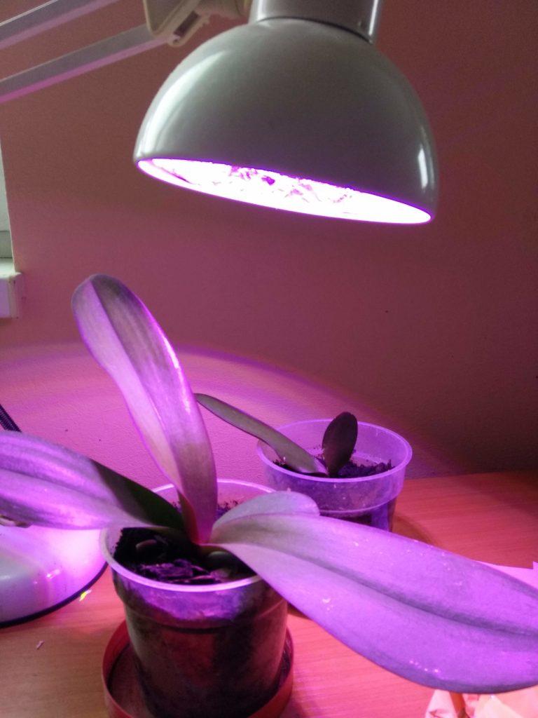Регулирование освещенности растений – досвечивание